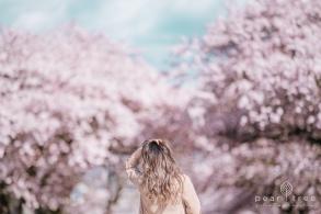 CherryBlossom-8